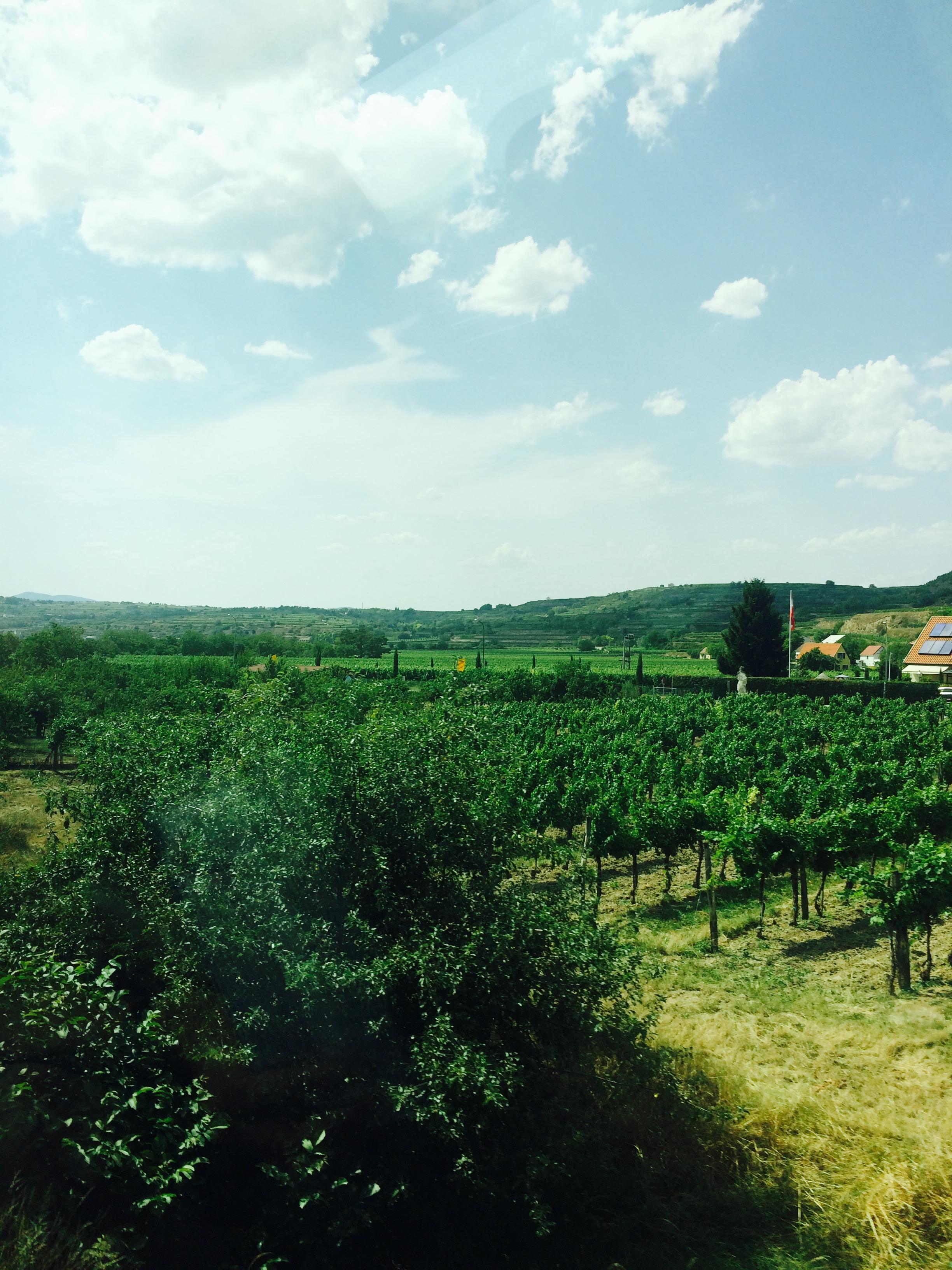 オーストリア畑